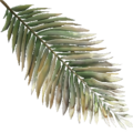 FY palm leaf02 SU.png