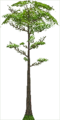 Fo giant tree Sp X F.png