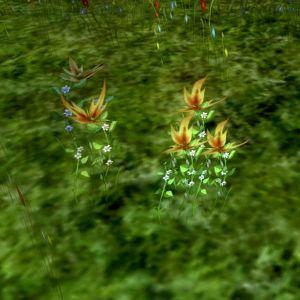 Iriscea-L.jpg