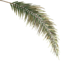 FY palm leaf01 SU.png