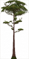 Fo giant tree Su X F.png