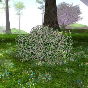 Irena in springtime.jpg