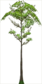 Fo big tree Sp X F.png