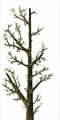 Fo giant tree branche Sp.png