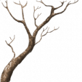 TR s2 mangrove branches.png
