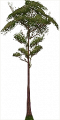 Fo big tree Su X L.png
