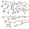 TR bamboo leaf Wi.png