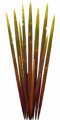 Fo S2 spiketree leaves Au.png