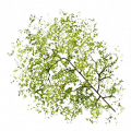Fo giant tree chapeau Sp.png