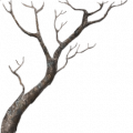 TR s2 mangrove branches Wi.png