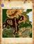 Carte des Rangers (rite Ranger)