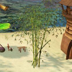 Un bambù à Fairhaven