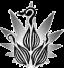 Trois graines en germination sur une feuille en forme d'étoile