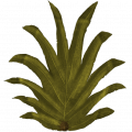 Tr pipetree feuille.png
