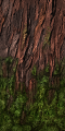 Fo giant tree tronc mousse Su.png