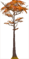Fo giant tree Au X L.png