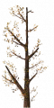 Fo giant tree branche Au.png
