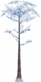 Fo giant tree Wi X F.png