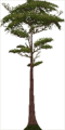 Fo giant tree Su X L.png