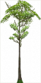 Fo big tree Sp X L.png