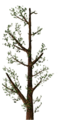 Fo giant tree branche Su.png