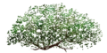 Fo giant tree feuillage Su.png