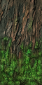 Fo giant tree tronc mousse Sp.png