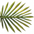 Palmtree-leaf-small outgame.png