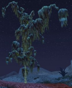 Jayazeng en hiver