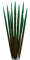 Fo S2 spiketree leaves Su.png
