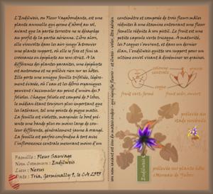 Lou Herbier 04 Endilweis A.png