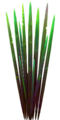 Fo S2 spiketree leaves Sp.png